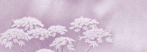Violetter Banner mit Blumen ohne Schrift