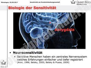vergrößerte Amygdala im Scan